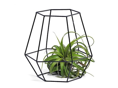 Phytplant_in_designmand.jpg